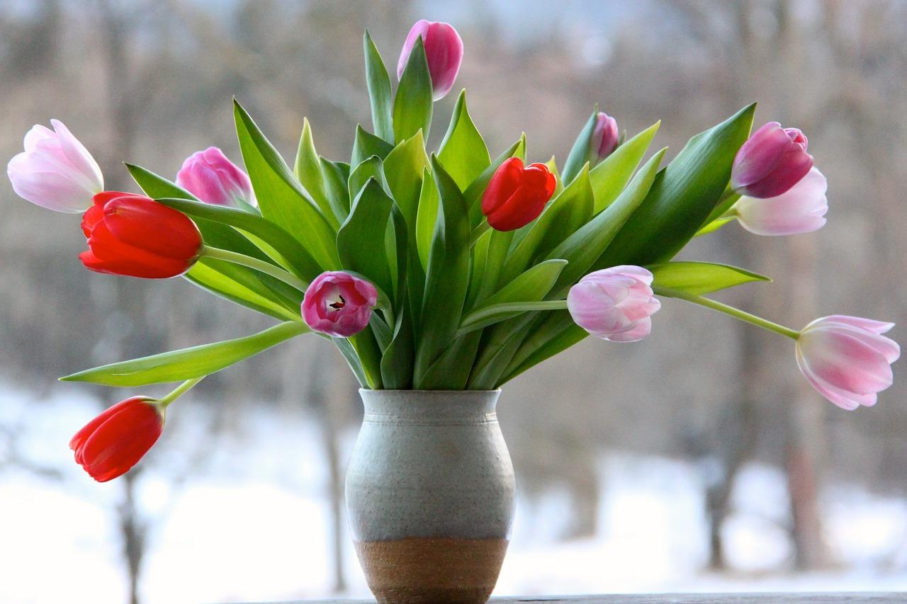 Tulipany popularne w różnych formach