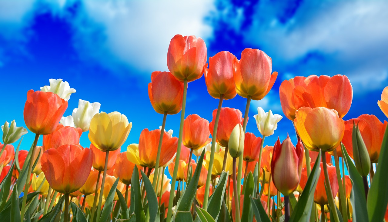 Wartość języka kwiatów
